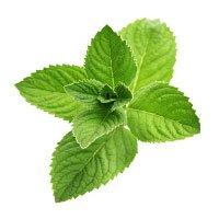 Herbal Aurum, gel, sastojci, sastav
